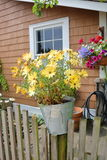 A Bucket of Daisies. Vertical view of an outdoor bucket or pail used as a planter for bright, yellow daisies stock photo