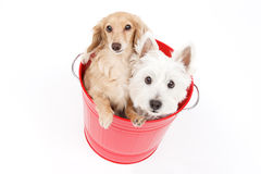 Bucket and dogs Stock Images