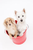 Bucket and dogs Royalty Free Stock Image