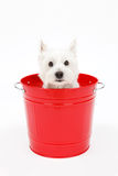 Bucket and dogs Royalty Free Stock Photography
