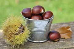Bucket filled with chestnuts Stock Photos
