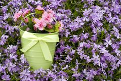 Bucket of flowers with fresh Phlox Background Stock Photo