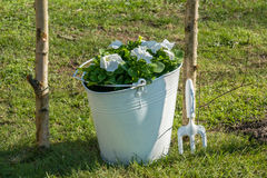 Bucket with flowers Royalty Free Stock Images