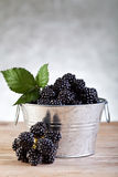 Bucket of fresh blackberries on silver background Royalty Free Stock Image