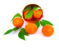 Bucket of fresh mandarins Stock Photos