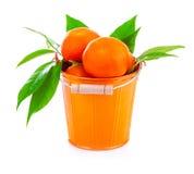 Bucket of fresh mandarins Royalty Free Stock Images
