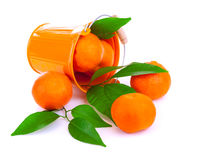 Bucket of fresh mandarins Stock Photography