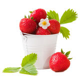 Bucket with fresh strawberry on the isolated white Royalty Free Stock Photos