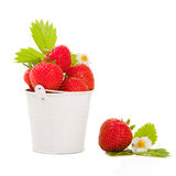 Bucket with fresh strawberry on the isolated white Stock Images