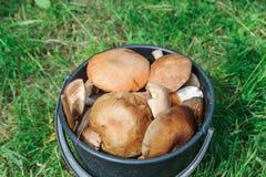 A bucket of fresh wild mushrooms, close up Stock Image