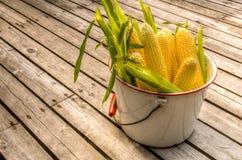 Bucket of fresh yellow sweet corn Stock Image
