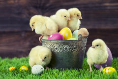 Bucket full of easter eggs and chicken Stock Images