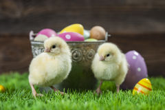 Bucket full of easter eggs and chicken Stock Photos