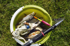 Bucket full of fishes. Stock Images