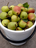 Bucket full of pears Royalty Free Stock Image