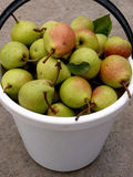 Bucket full of pears Royalty Free Stock Images