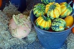 Bucket full of pumpkins Stock Photo