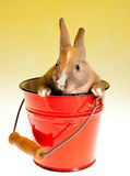 Bucket full of rabbit Royalty Free Stock Photography