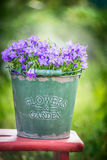 Bucket with garden bluebell flowers on green nature background Stock Photo