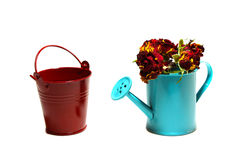 Bucket and garden handshower  with roses inside on a white backg. Decorative garden light blue handshower with roses and red garden bucket on a white backgrownd Stock Images