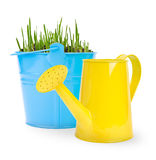 Bucket with grass and one water can on a white background. Royalty Free Stock Photography