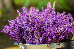 Bucket with lavender Royalty Free Stock Photography