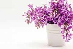 Bucket and lilac on a white background Royalty Free Stock Images