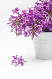 Bucket and lilac on a white background Stock Photo