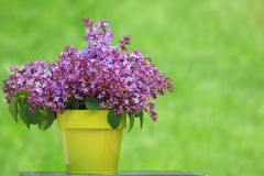 Bucket of lilacs Stock Photography
