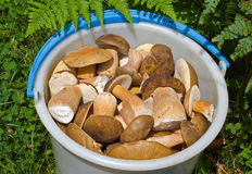 Bucket with mushrooms 14 Royalty Free Stock Photos