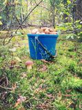 Bucket of mushrooms Royalty Free Stock Images