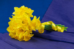 Bucket of narcissus flowers on blue-purple background Stock Image