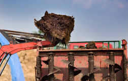 Bucket with natural manure Stock Images