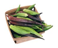 A bucket of okra (Abelmoschus). Isolated on white background Royalty Free Stock Image