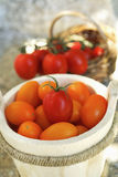 Bucket of Olivette tomatoes Stock Photography