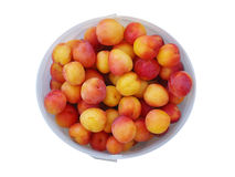 Bucket of organic plums Royalty Free Stock Photography