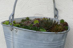Bucket with plants Royalty Free Stock Photos