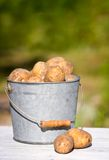 Bucket of potatoes on green background Royalty Free Stock Photos