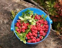 Bucket with raspberries Stock Image