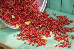 Bucket with red currant 1 Royalty Free Stock Images