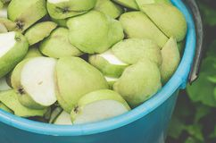 bucket of ripe pears in a garden/pailful of the ripe cut pearsm, top view stock image