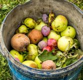 The bucket of rotten autumn fruits Stock Photos