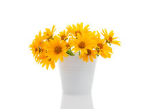 Bucket with Rudbeckia Royalty Free Stock Images