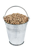 Bucket with rye. Isolated on white background royalty free stock images