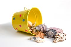 Bucket of Seashells Stock Photos