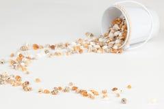 Bucket of Shells Royalty Free Stock Image