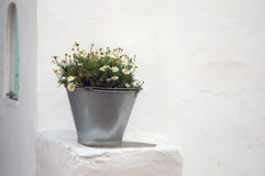 A bucket with some daisies corner of the building Stock Images