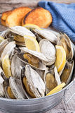 Bucket of steamed clams Stock Image