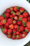 Bucket of Strawberries. A bucket of fresh strawberries picked from a farm stock photos