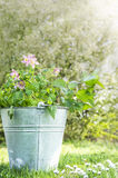 Bucket with summer flowers in bucket Royalty Free Stock Images